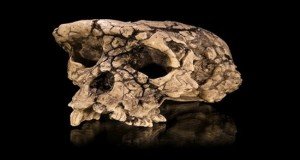oldest human foosil